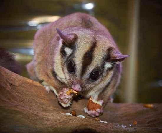 australian-wildlife-1675479_1280