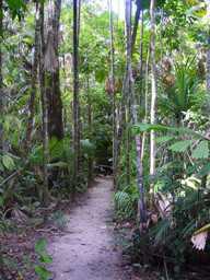 fan palm walk